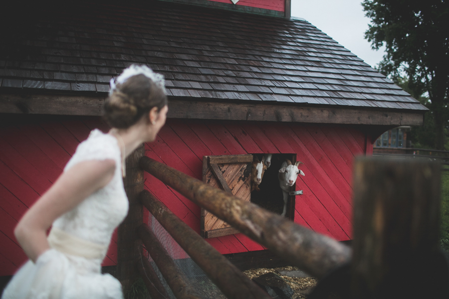 bride and goats