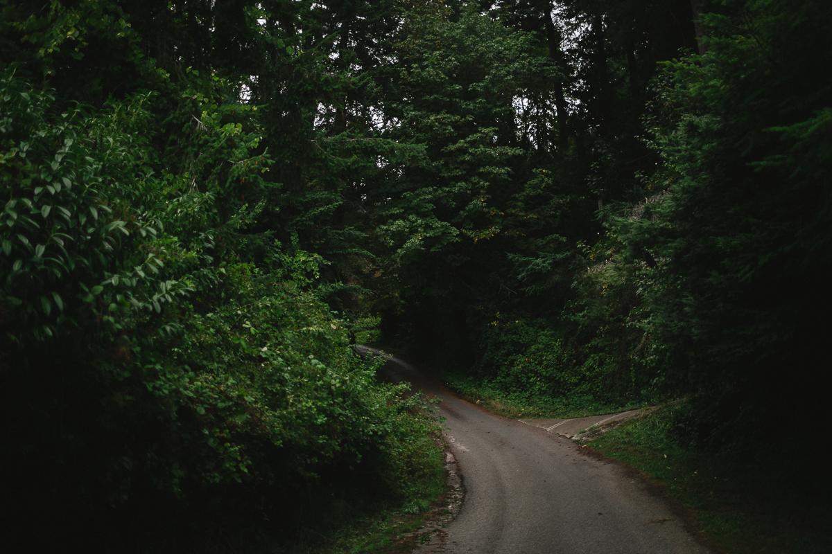 sunshinecoastelopement-forest path