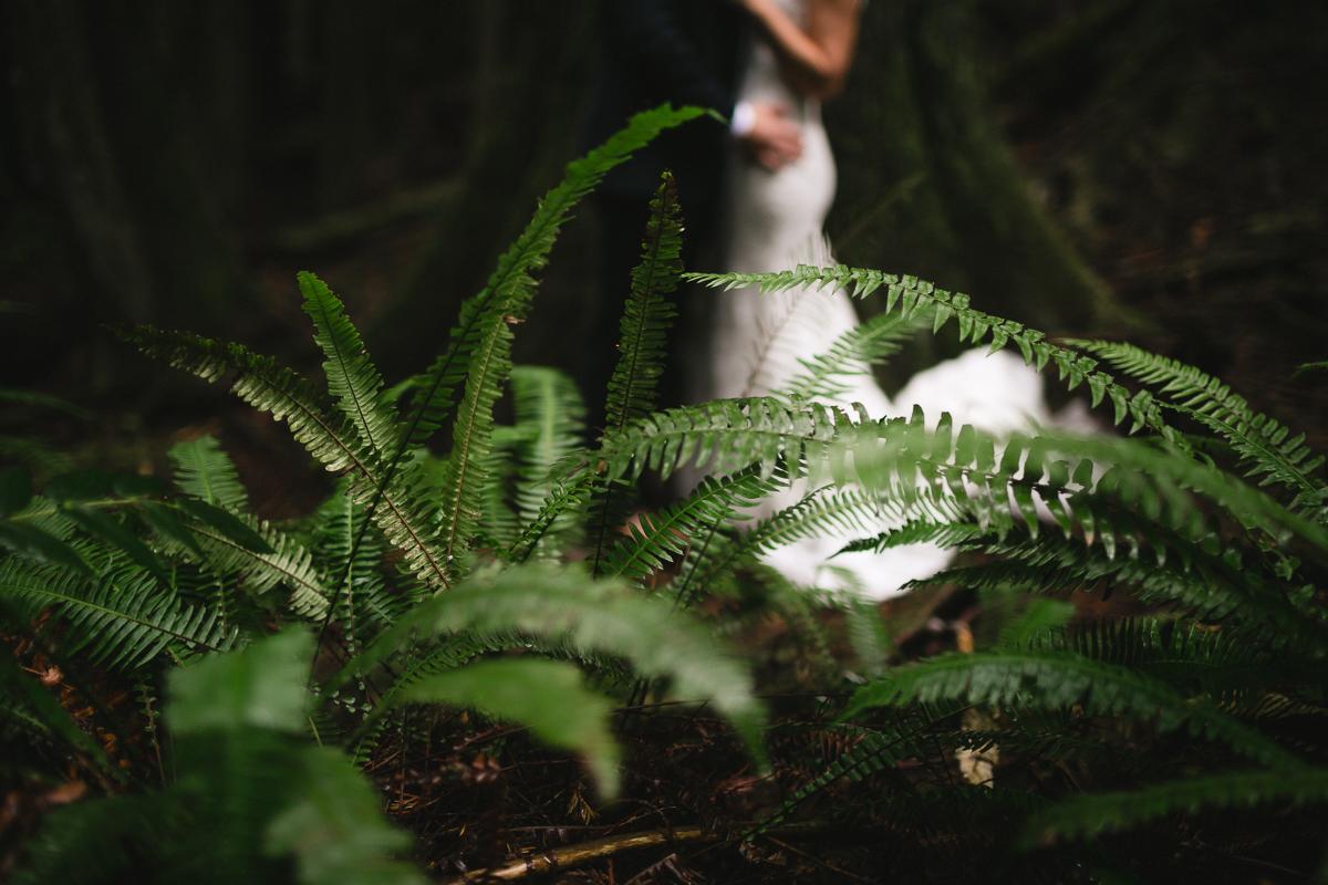 sunshine coast elopement-ferns