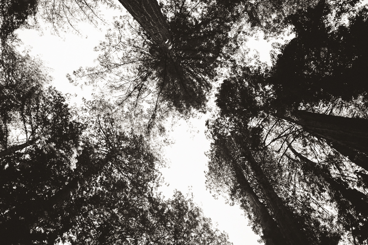 muir woods portrait photographer